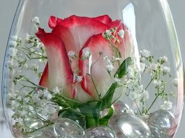 Rosa-stabilizzata