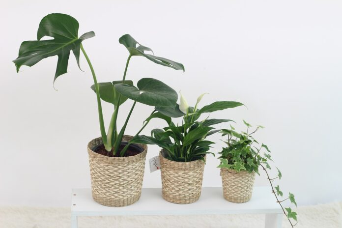 Arredare con piante